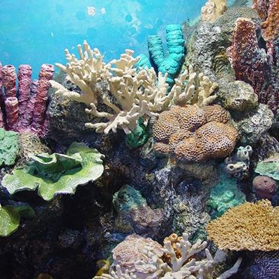 玻璃钢珊瑚雕塑